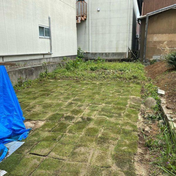 事務所裏庭の芝はり